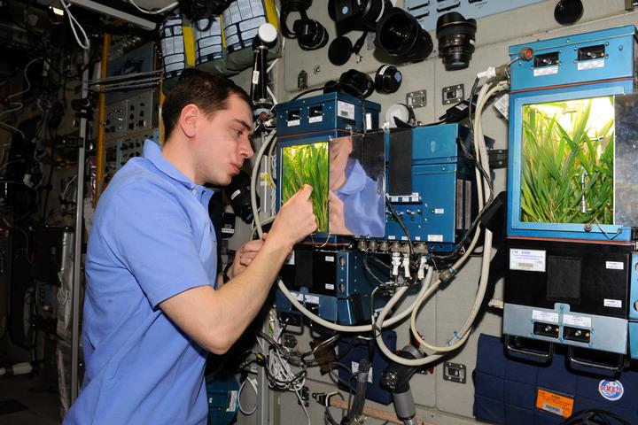 Растения в космосе