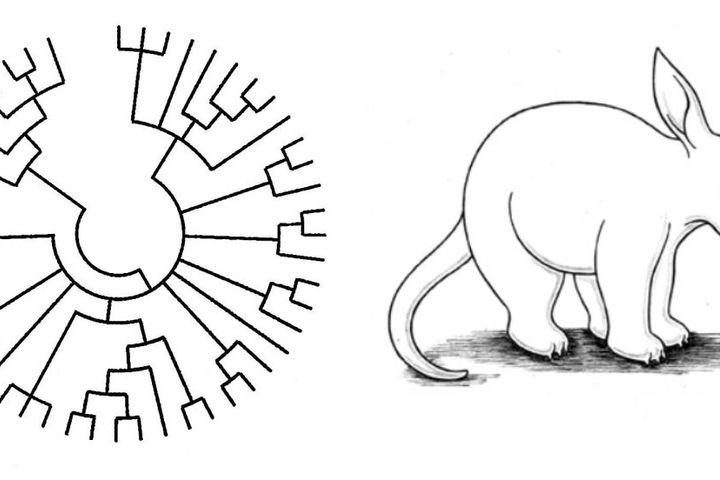 От Аристотеля до биоинформатики: древняя и современная система живой природы