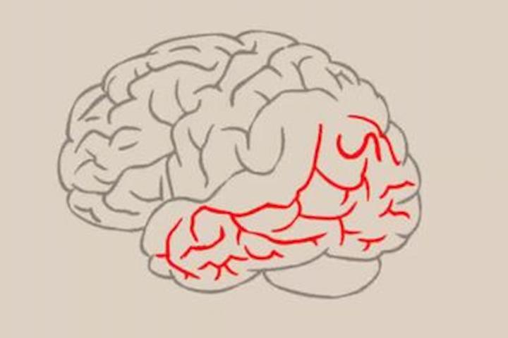 """""""Логика: мышление, память и интеллект"""""""