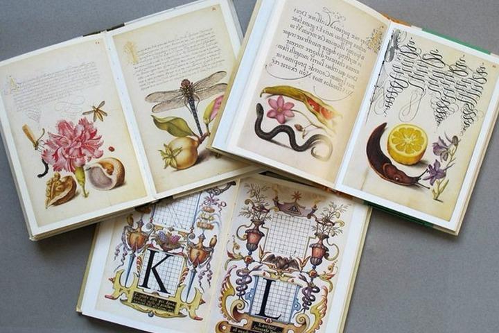 Хобби-класс «Каллиграфия и ботаническая иллюстрация»