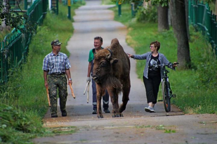 Презентация фотовыставки «70 лет храним генофонд зубров России»
