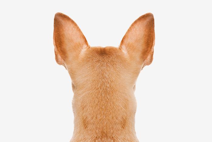 Система распознавания лиц: понимает ли ваша собака, когда вы расстроены?