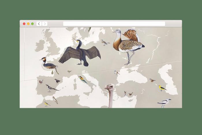 Интерактивная история эволюции птиц
