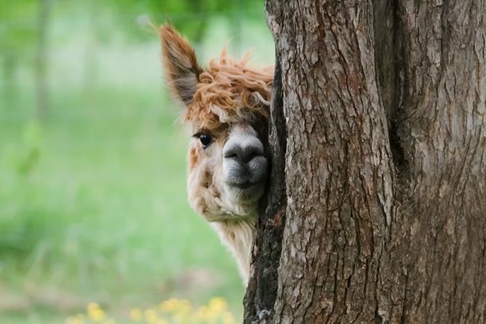 Спасать черепашат и гладить лам: 10 волонтерских программ во всех уголках мира