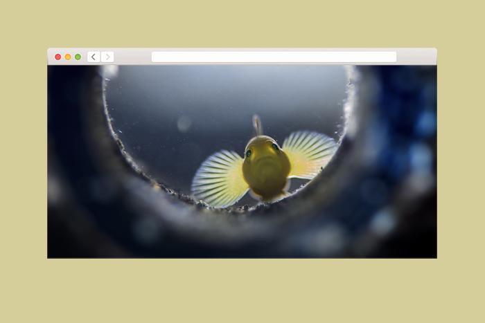 Пьют ли рыбы соленую воду?